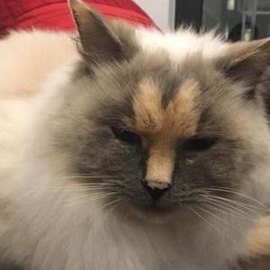 这猫长了一张人民币的脸,却被澳洲人民歧视抛弃