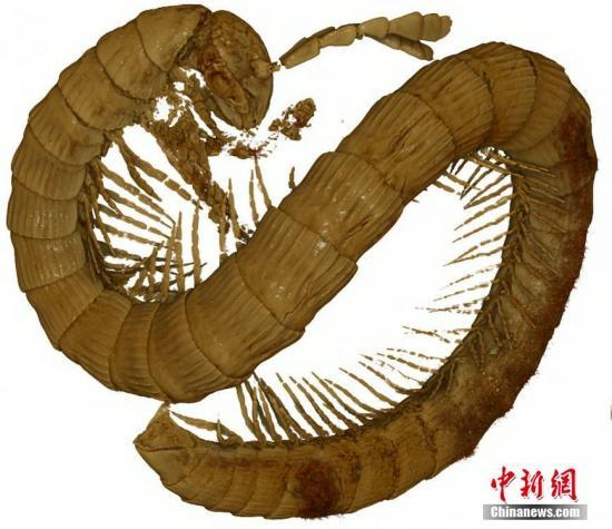 材料图:千足虫。 图片滥觞:视觉中国