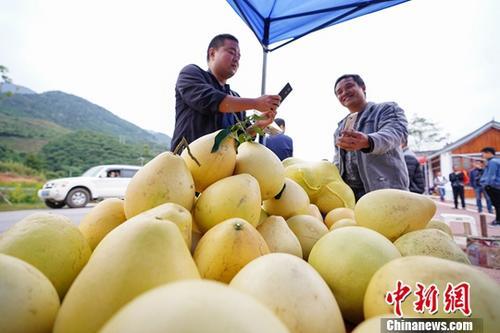 乐山晒成绩单:1-9月网络零售额超20亿 美食占比居首
