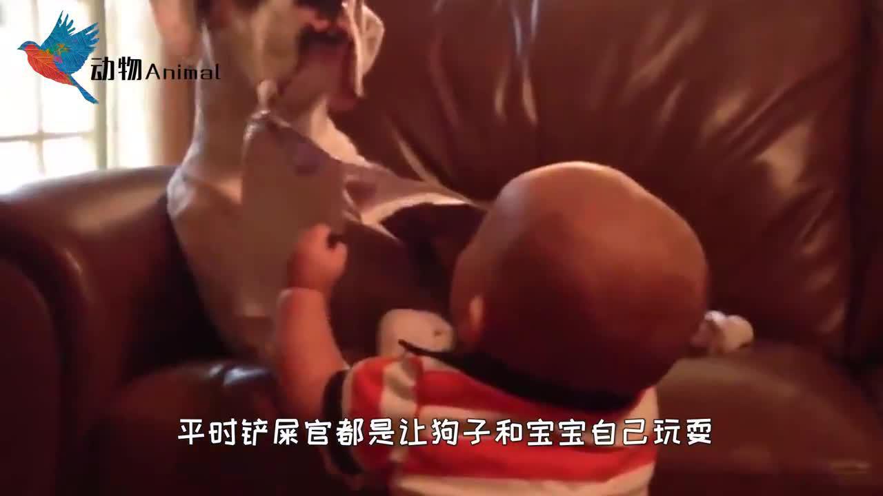 宝宝抢了狗狗的小窝,狗狗生气了