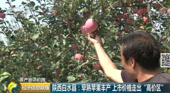 苹果丰收了咱买便宜了!果农也不赔了!