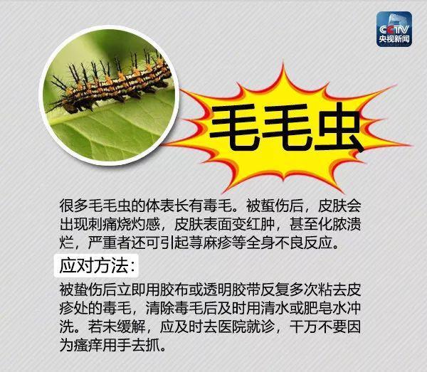 【吓人】饭后散步被虫子咬一口,广州阿婆紧急送进ICU!遇到这些虫子千万要小心