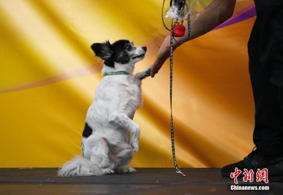 材料图:狗。中新社记者 刘闭闭 摄