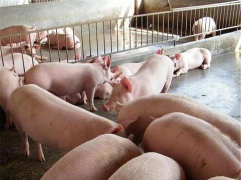 中秋节后猪肉价格回落,则以后猪肉价格走势会怎么样?