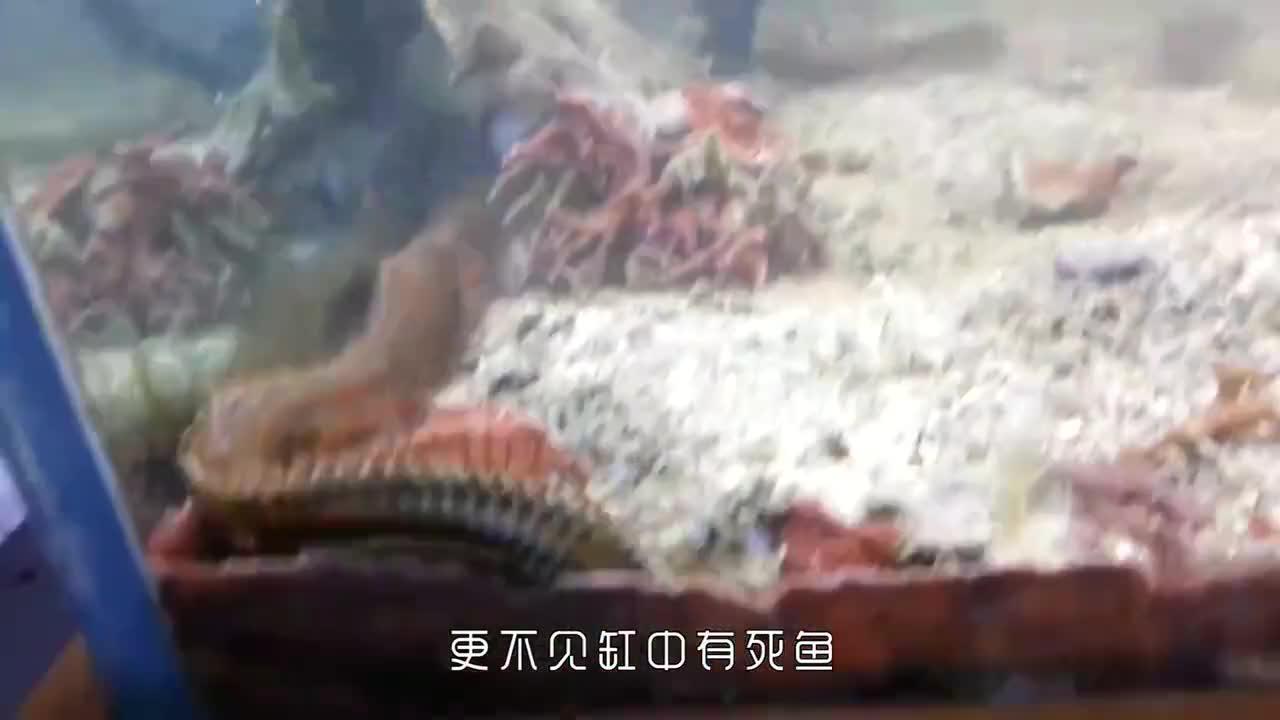 男子养的鱼无故失踪,将鱼缸全部清理之后,发现是它在作怪