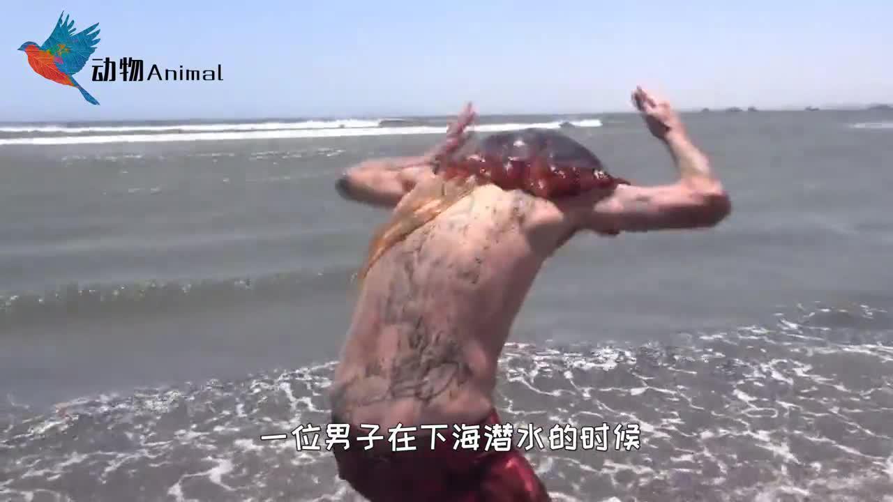 男子出海潜泳,结果被鱿鱼缠上,把自己当成外卖送吗