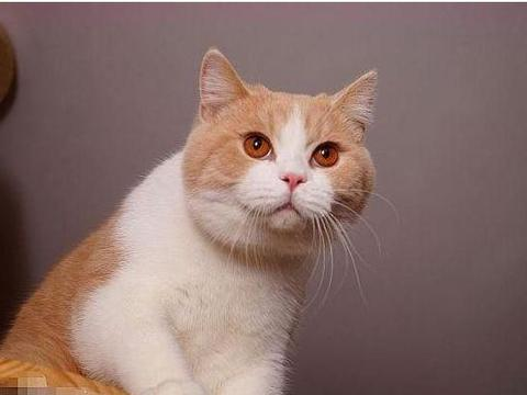 年轻姑娘沉迷宠物猫,半年养81只猫花费300万,如今卖房还债