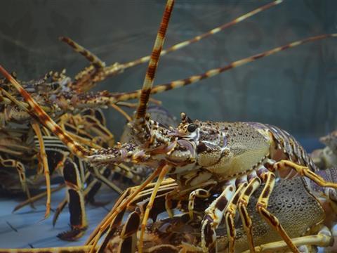 研究发现:海洋地震勘探会对海洋无脊椎动物产生影响