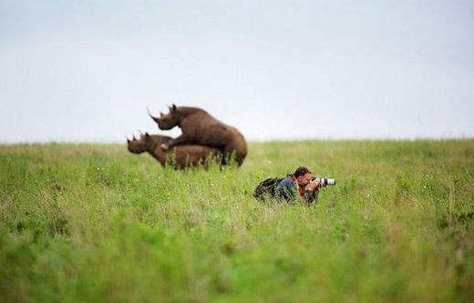 动物之间的交配,为什么不用学习而无师自通?