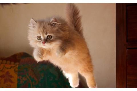 想让猫咪保持乖巧的状态,这6件事要做足