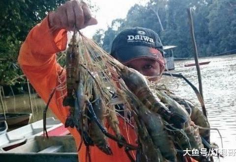 """湄公河大虾""""泛滥成灾"""",1只重1斤愁坏当地人:请求各国吃货帮忙"""