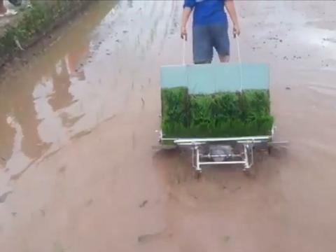 牛人小伙发明新型水稻插秧机,效率提高了8倍,造价300元