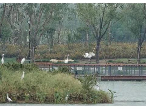 华山湖东边的湖中小岛,已成鹭鸟们的栖息地