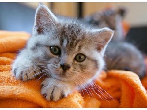 紧张时看看这14张超治愈的猫咪照片,让可爱的猫咪给你放松大脑