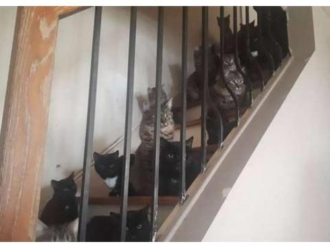 家里楼道和厨房充满了上百只猫,看上去就像一群讨饭的,真磕碜