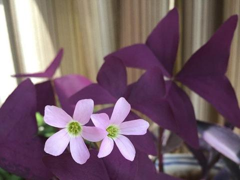 养花就养花量大,阳台栽上印象派,花开成海四季赏花,绚丽夺目