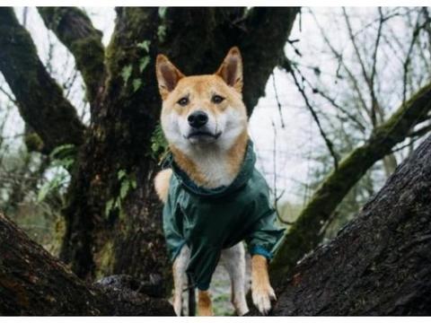 树是猫咪的制高点?狗子表示不服!会爬树的狗狗们让猫咪慌了神