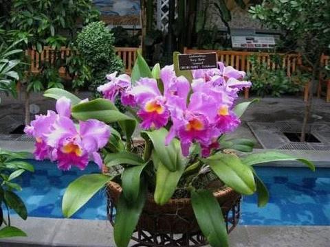 三伏天一来,天气温度高,养这3种花的人注意了,别越养越病怏怏