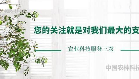 巍峨壮丽八面山!一县一品公益助农,湖南桂东农特产品玲珑茶