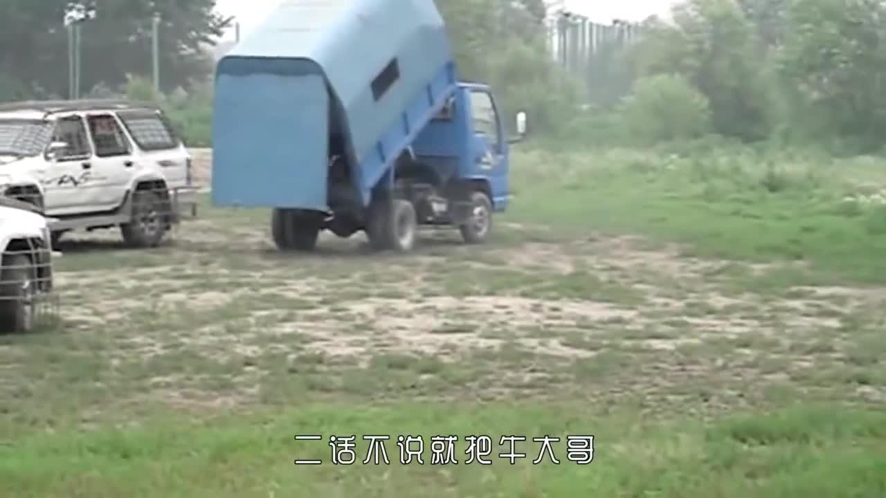 中国东北虎饲养基地,采取活体投喂方式,场面十分惨烈!