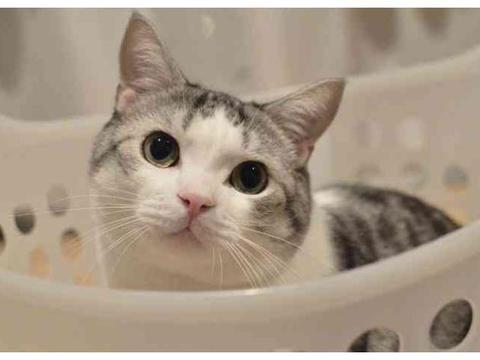 """""""寒假好无聊啊,只有肥皂剧能打发时间""""12张猫咪趣图让你笑不"""