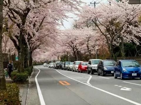 中国游客去日本旅游:街道确实干净,唯一一点无法理解!