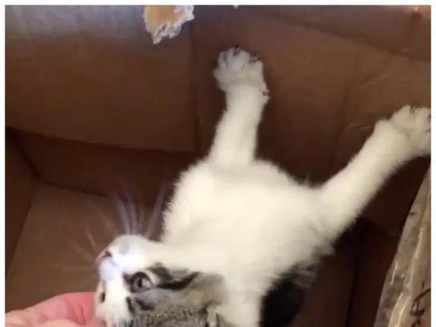 女子在家门口捡到一只猫,带回家后精心照顾,2周后又来了一只猫