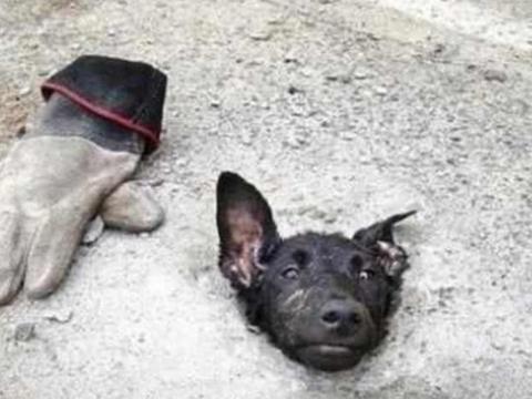流浪狗被恶意埋在水泥地里,只能狗头在外呼吸,画面让人看了害怕
