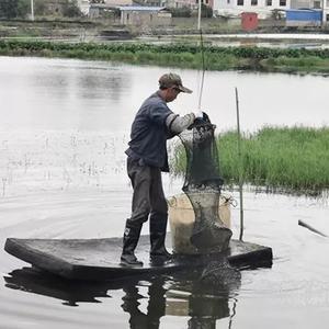 """贵州安顺西秀区东屯乡:四万斤大闸蟹""""抢鲜""""上市"""