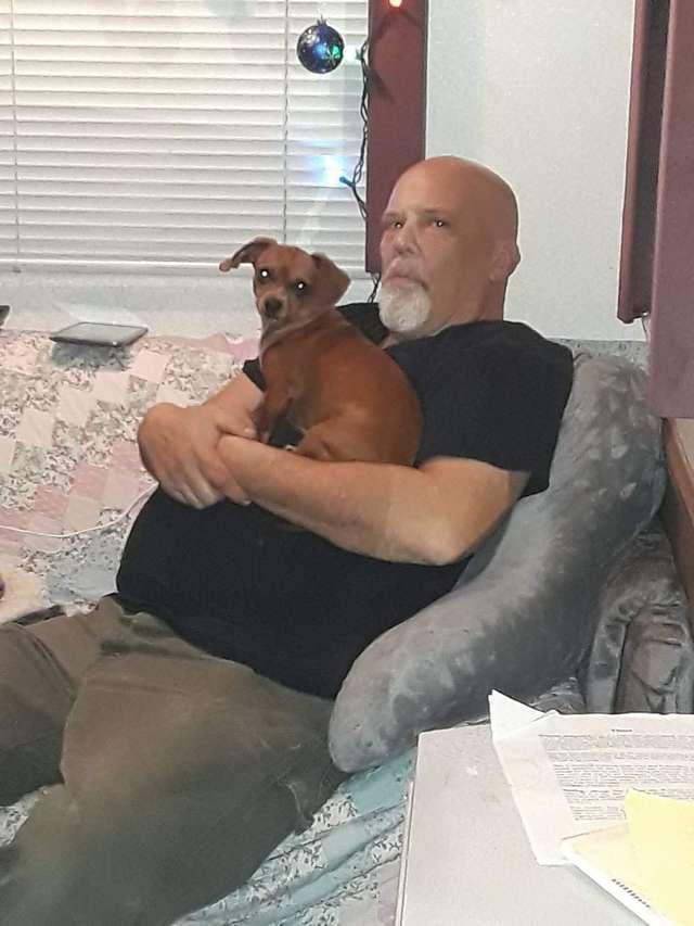 主人突发疾病入院,忠犬陪着不肯走,隔天家人才知道狗狗用意
