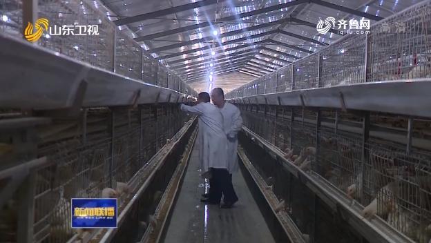 山东:肉鸡产业升级加速 鸡肉供应安全有保障