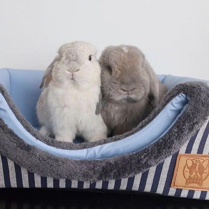 兔兔都是成双成对的..好像毛绒玩具啊!为什么这么可爱!
