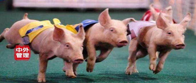 猪价上涨,为何上海受冲击小?东三省还能下跌?