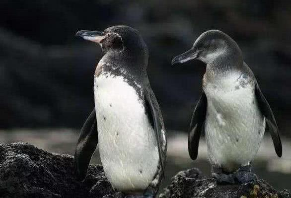 此地位于赤道地区,却有寒带动物生存,丰富物种启发达尔文进化论