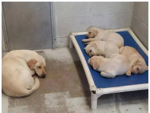 收容所里的动物们就过得抑郁吗?只要保持开心,总有一天会走出去