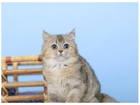 猫咪生病了都有哪些疾病和症状?猫咪生病应该如何治疗?