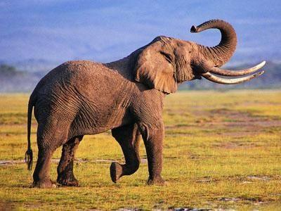 世界上最大的飞行动物有多重?史前动物比你想象的要大11倍
