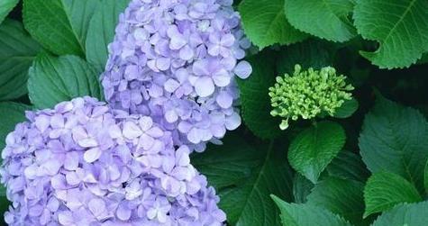 中秋过后逛花市,这种花,一定要买,最好看最好养,10快钱买一盆