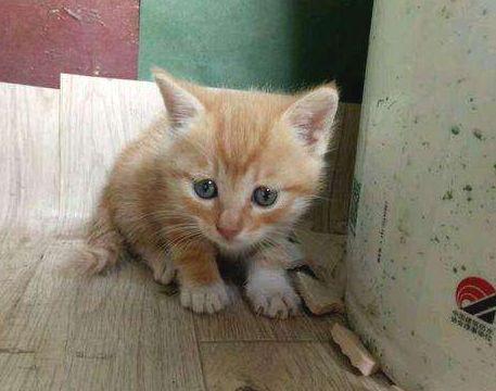 一只橘猫的回家路...从路边的流浪猫再次变成主人怀里的小宝贝
