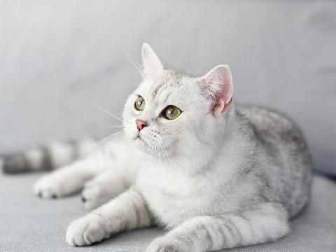 养猫前有4个错觉,养猫后一言难尽,猫咪是不拆家的!