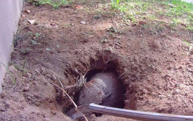 院子被不明生物打了一个洞,用水攻将其逼出,男子立马把它放生
