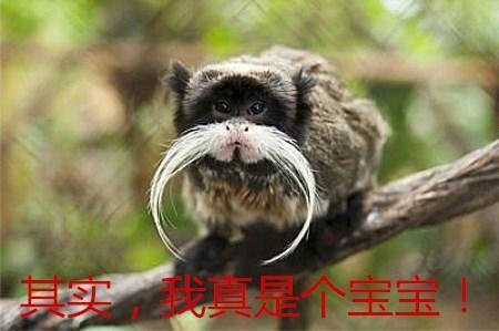 几种长相逆天动物,个个都是行走的表情包,最后一位能让人笑一年