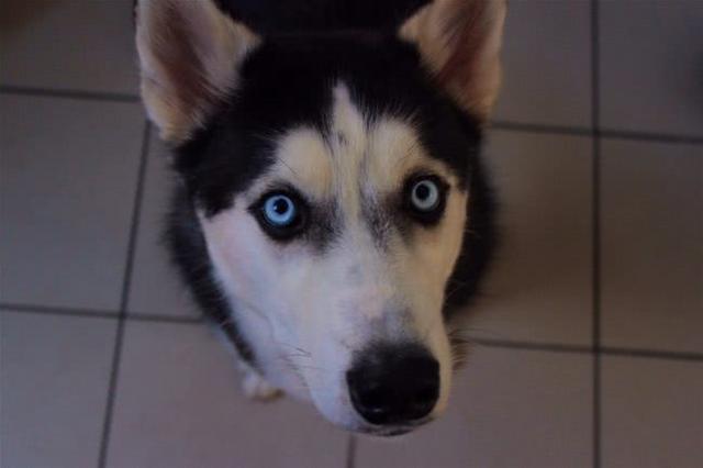 狗狗时刻紧跟着主人?小心是焦虑所致,不然出门上厕所都会跟着
