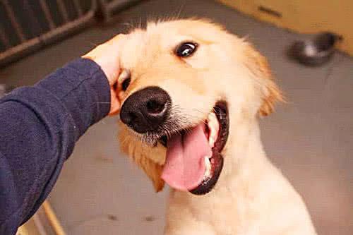 """人们喜欢""""摸狗头"""",你知道在狗狗眼里这代表什么意思吗?"""