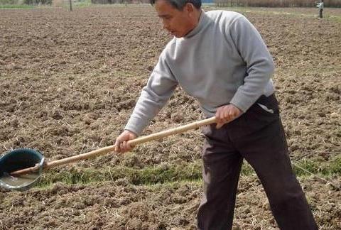 土地被大量的畜禽粪便污染了,还能种庄稼吗?