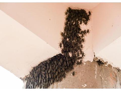 收捕野蜂群,没有木箱,可以用什么代替?用这4种箱子,轻松解决