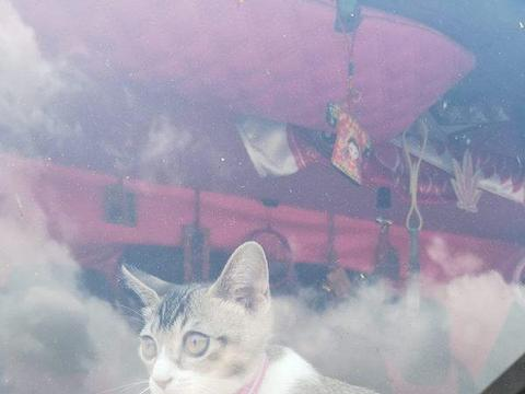 猫咪成为货车司机跟班,坐玻璃窗前看风景,连出门都是藏在挎包中