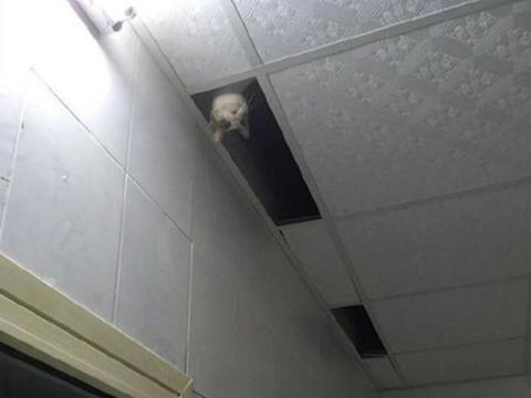 下班回家发现猫咪不见了,主人刚一抬头,却被眼前这幕吓坏了!