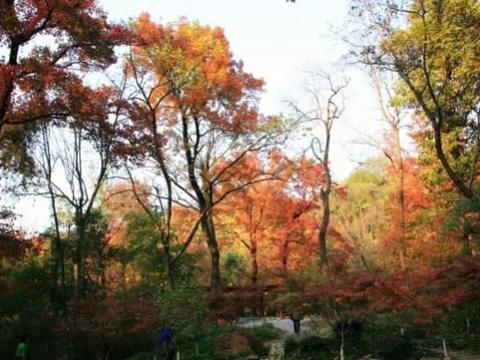 """江苏""""秋季最美""""的8个景区,国庆假期十分值得游玩!"""