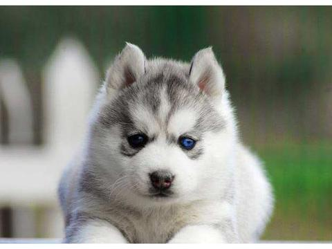 这5种宠物狗一旦成为流浪狗,几乎很难独立生存,要看紧了